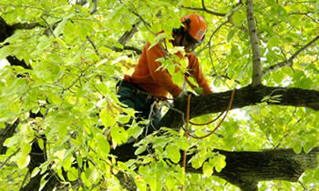 Tree Trimming in Oak Park IL Tree Trimming Services in Oak Park IL Tree Trimming Professionals in Oak Park IL Tree Services in Oak Park IL Tree Trimming Estimates in Oak Park IL Tree Trimming Quotes in Oak Park IL