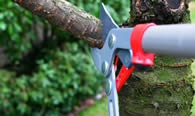 Tree Pruning Services in Oak Park IL